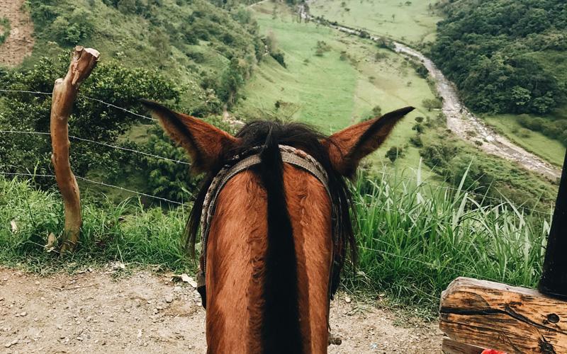 Vakantiehuis Zweden - paardrijden