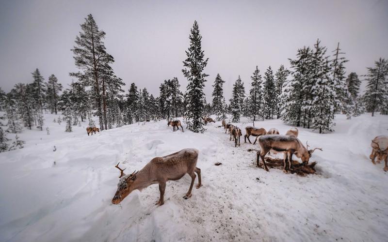 Vakantiehuis Zweden - Värmlands Moose Park